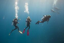 BD-150425-Maldives-8469-Homo-sapiens.-Linnaeus.-1758-[Diver].jpg